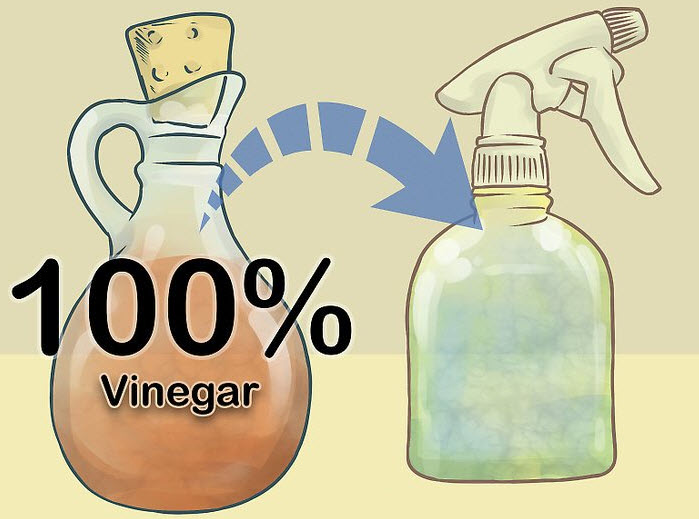 vinegar and water solution for cleaning car